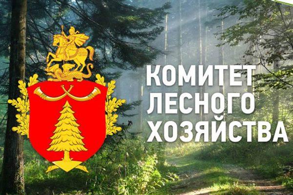 Все леса Московской области находятся под видеонаблюдением — Комлесхоз